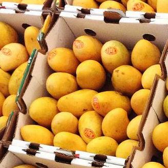 Ataulfo Honey Mangoes In A Box