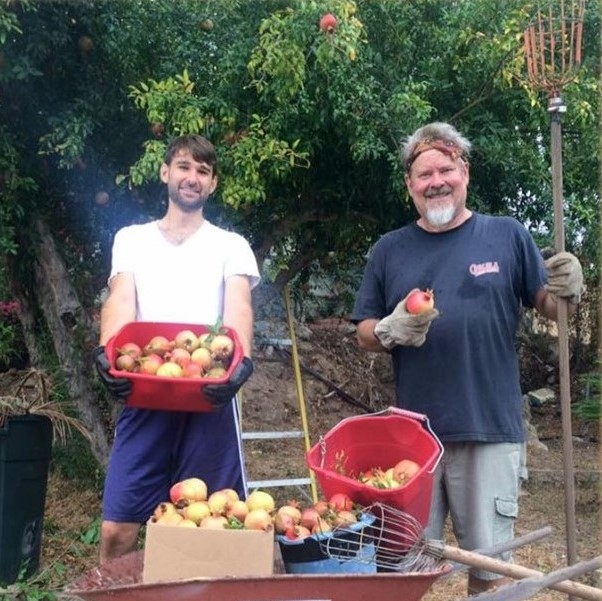 Two Men With Wheelbarrow Full Of Pomegranates And They Are Standing In Front Of A Tree.