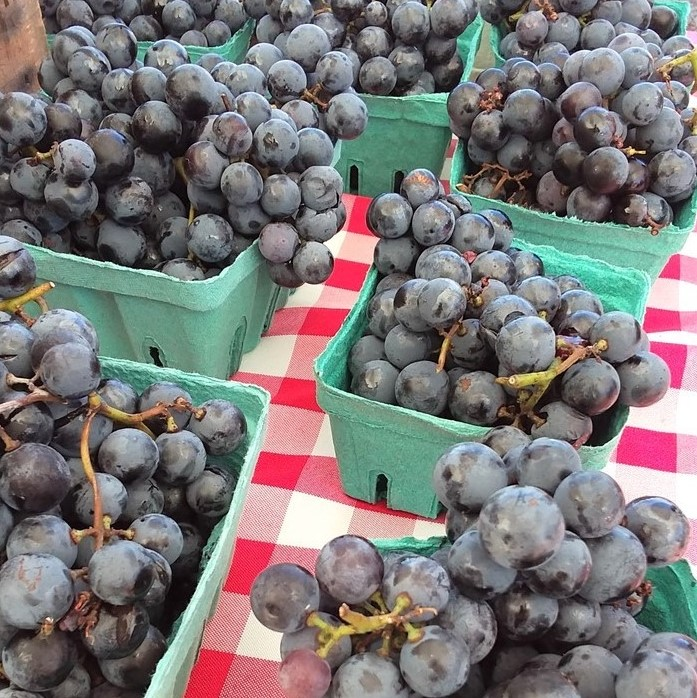 Blue/purple Grapes In Cardboard Baskets.