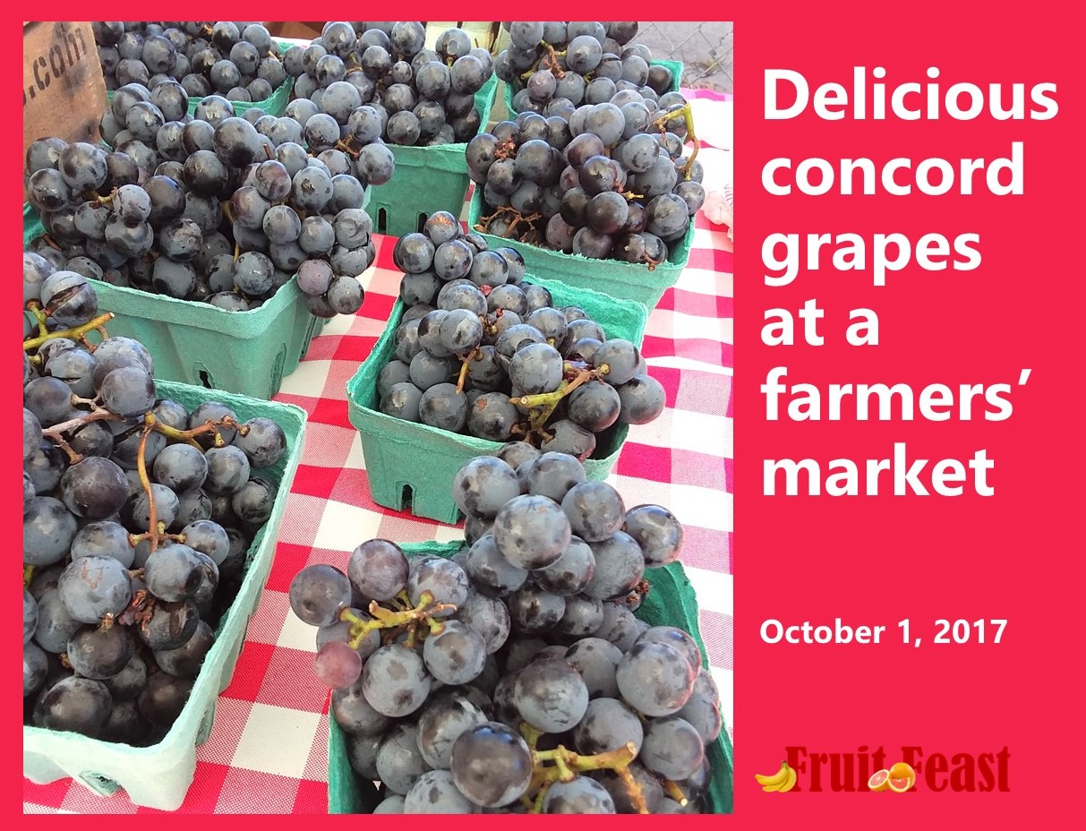 Concord grapes at a farmers' market. - Photo of blue/purple grapes in cardboard baskets.
